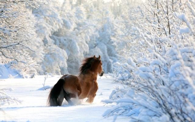 100 самых красивых зимних фотографии: пейзажи, звери и вообще 0 10f5d5 9790d358 orig
