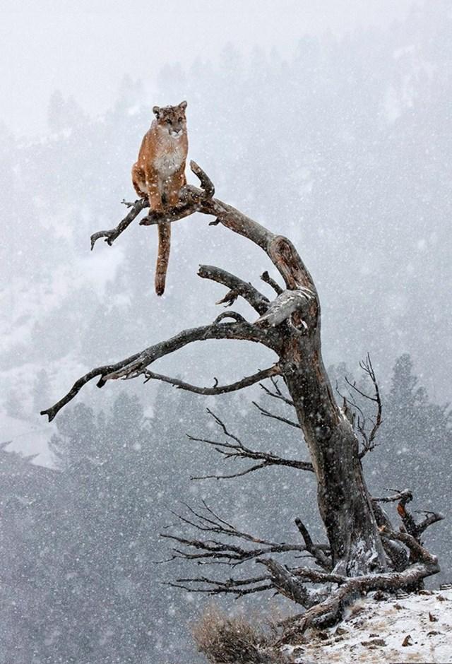 100 самых красивых зимних фотографии: пейзажи, звери и вообще 0 10f5d6 a1abbf6 orig