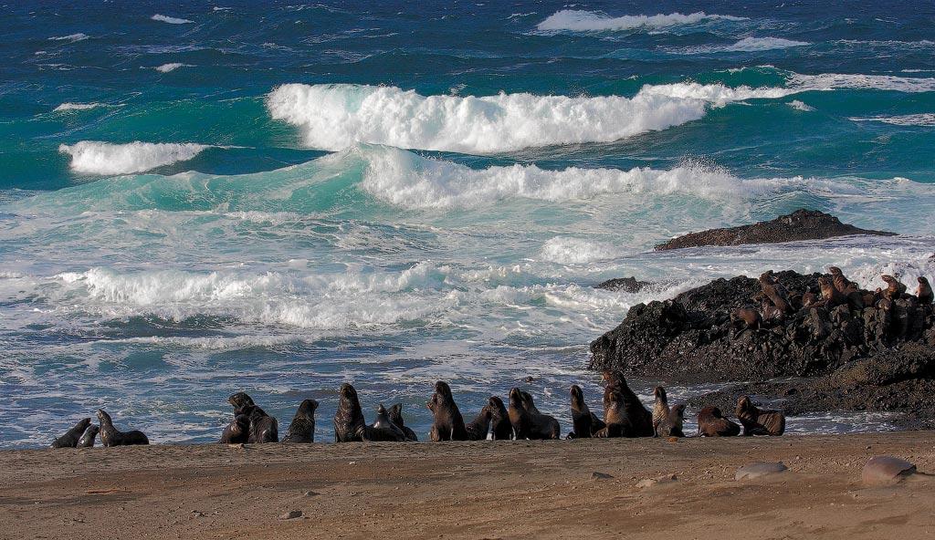 Морские приливы острова южная георгия