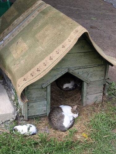 Кошки в будке