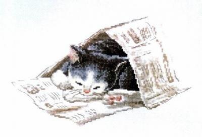 Кот в газете