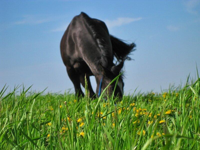 Довольная лошадь