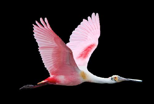 Ptice..... 0_85460_63aa6082_L