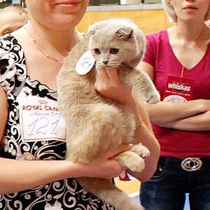 Best Junior - 121 LALUNA'S GERMINA LILAC SKY (Female) SFS j Кленова Марина Олеговна,