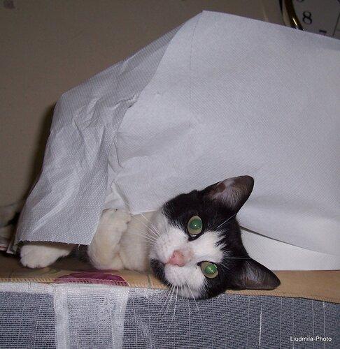 Бася рвёт бумагу