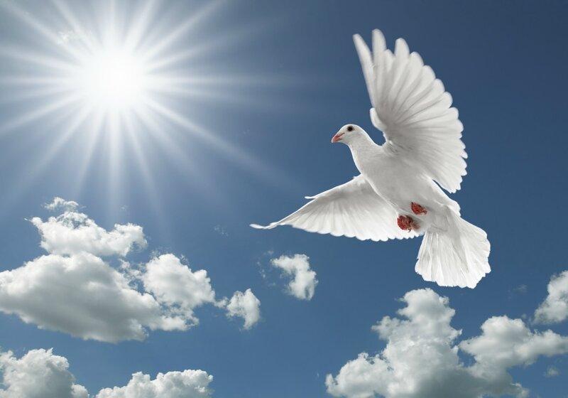 Сорвутся голуби