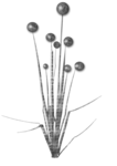 «Charcoal par PubliKado.PU-CU.GR» 0_60a8f_198321b1_S