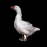 Птицы  разные  0_65eb2_bf9e930c_S