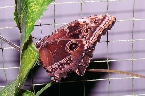 Выставка бабочек в Таганроге!