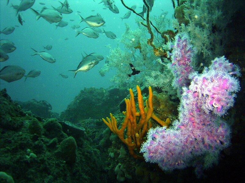 Подводный мир-Kораллы 16735