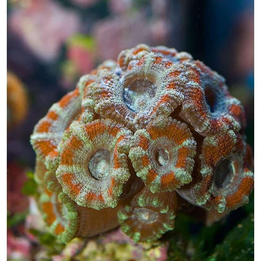 Подводный мир-Kораллы 39553