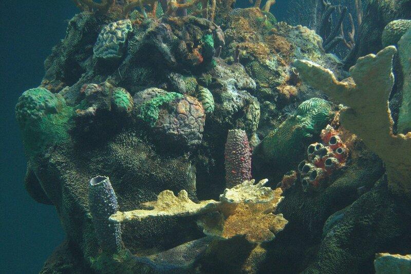 Подводный мир-Kораллы 53031