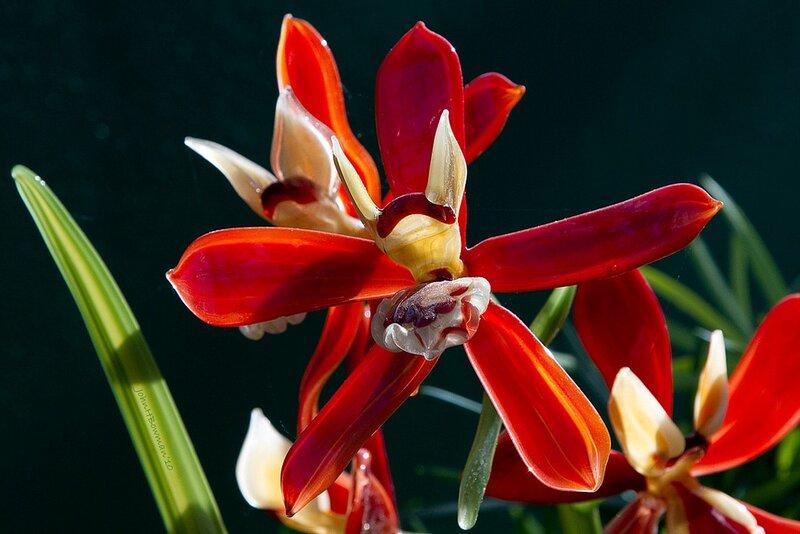 стеклянные цветы