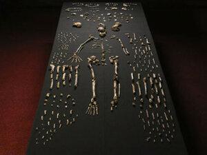 В ЮАР ученые обнаружили новый вид человека
