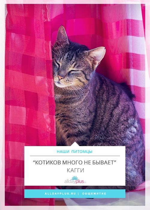 """""""Котиков много не бывает!"""""""