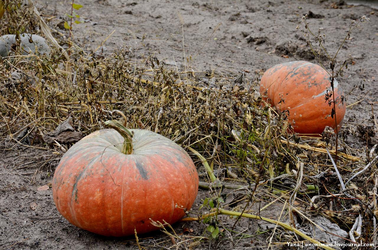 Осень в Баштане. Гомельский район