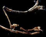 ldavi-ThePoet'sKeepsakes-driedflower6.png