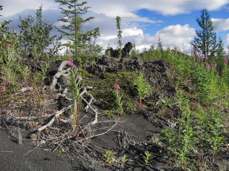 Растительность на вулканических почвах