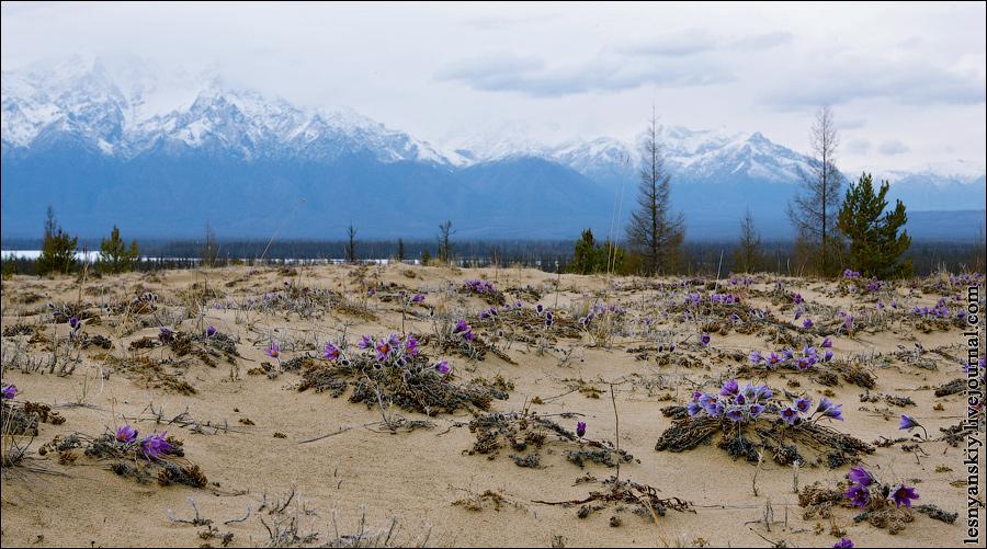пустыня забайкальского края фото