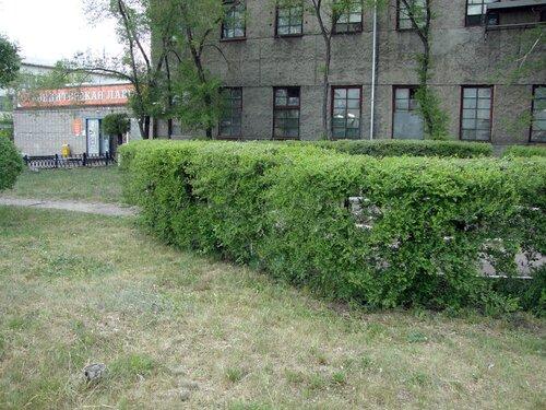 20110606 - Стрижка деревьев10