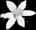 «Charcoal par PubliKado.PU-CU.GR» 0_60a92_8a19eca7_S