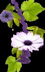«Violet_Surprise» 0_64059_4fee8b7f_S