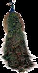 Аист,цыплята,павлин. 0_65e29_d406fef8_S