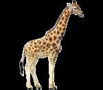 африка животные 0_662fd_810f449d_S
