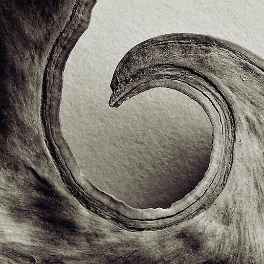 l Curve by Brian Jones