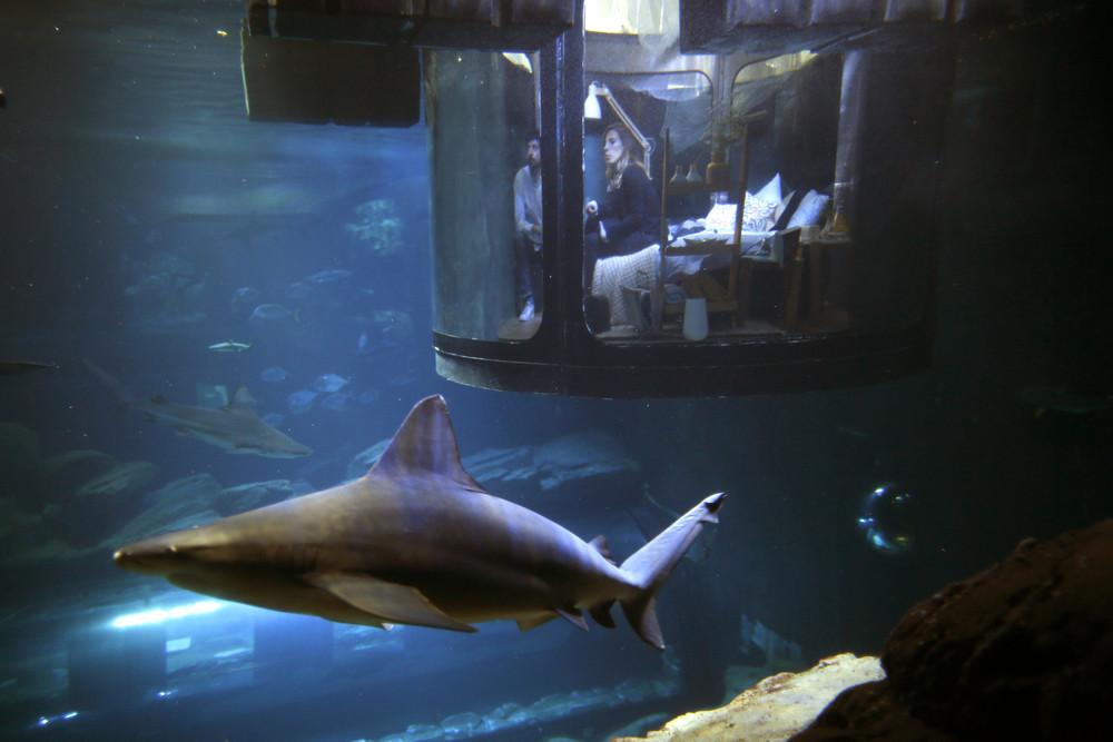 Ночь с акулами в Париже