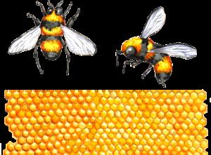 медовые соты и пчелы