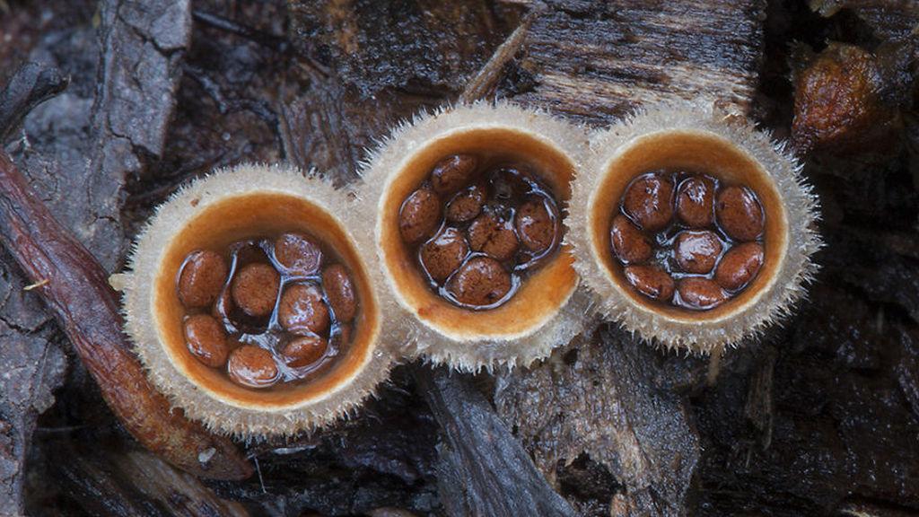 Стив Эксфорд: Красивые фотографии грибов Австралии 0 165ccc 9779590f orig