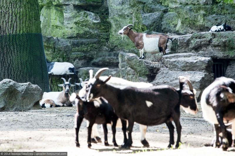 Тирпарк в Берлине, самый большой сафари парк в Европе