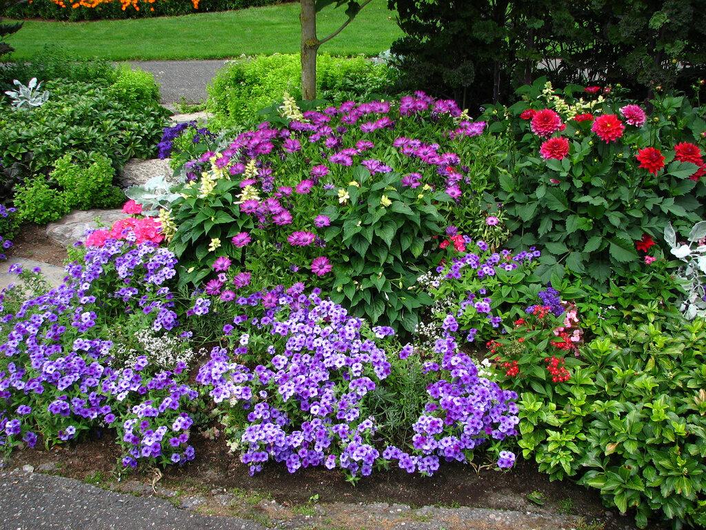 связана вербена фото цветов на клумбе с другими цветами фото ландшафт торжища торговых