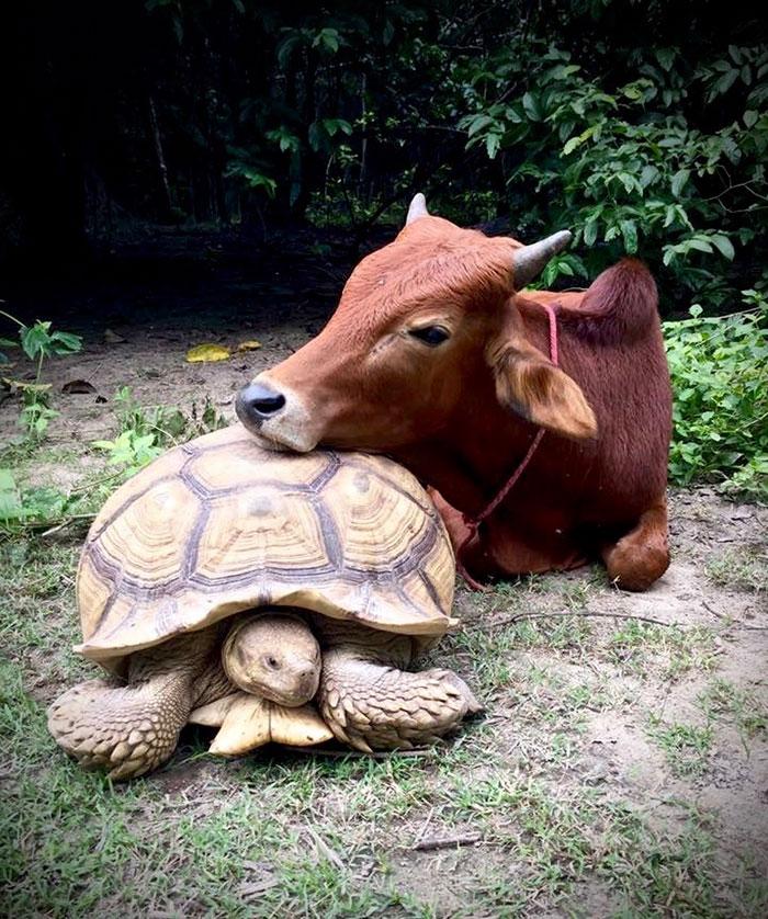 «Они часто ходят друг за другом, вместе едят и отдыхают. Мы надеемся, что эта необычная дружба будет