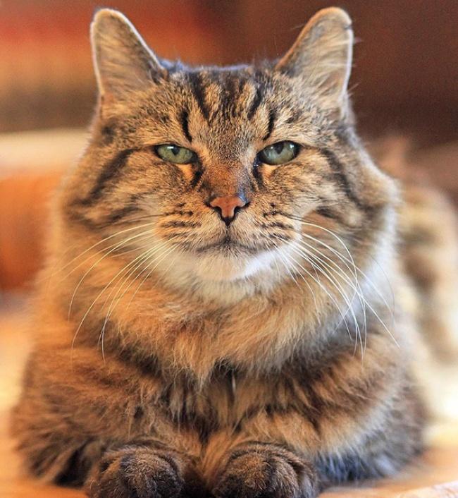 Кота забрали изприюта вштате Орегон, когда его хозяйке Рид Окура было всего 7лет. Сейчас девушке