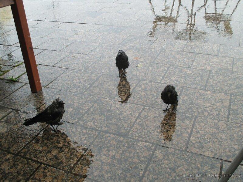 А вот мокрых финских галок кому?