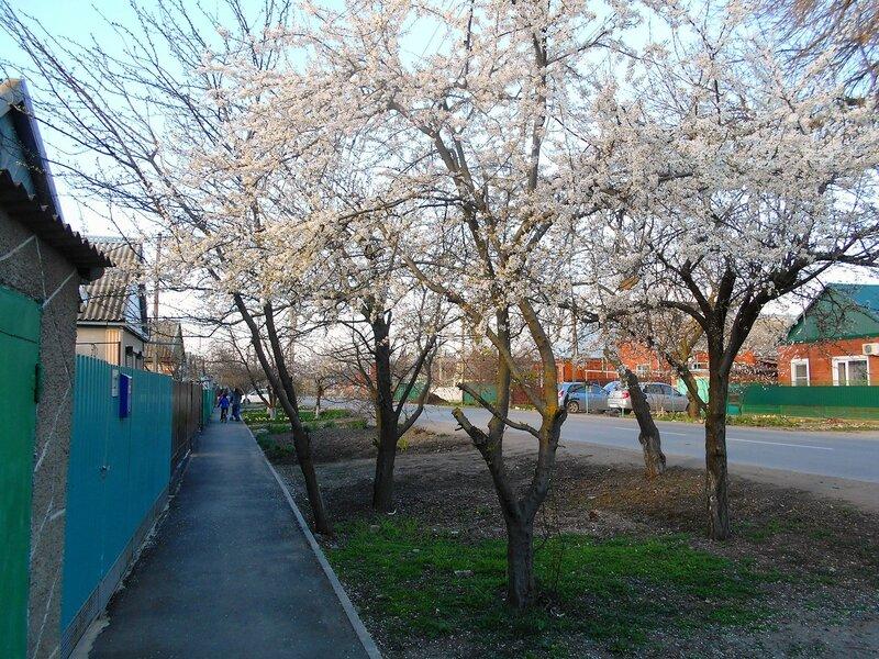 В наряде белом... подарок Весны ... DSCN4654.JPG