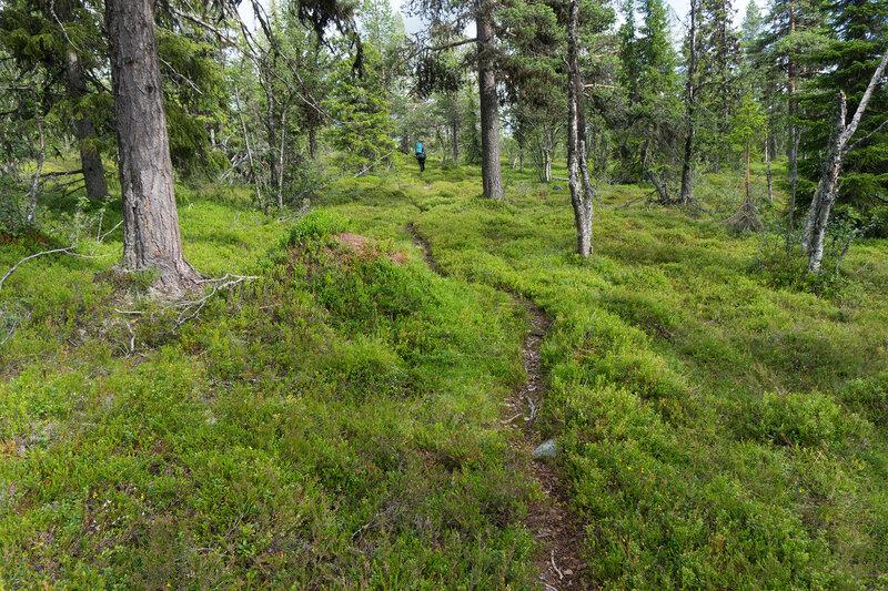 пешеходная тропа по лесу в каньон Дёры (Døramot)