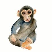 Рисунок маленькой обезьянки