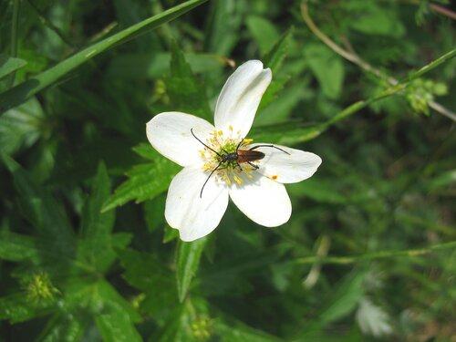 Маленький цветок, маленький жучок