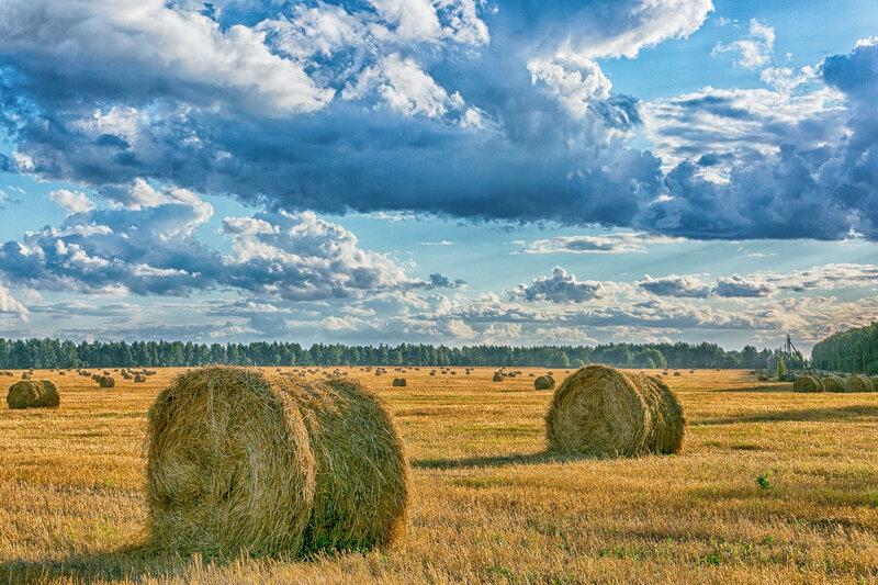 Рязанские пейзажи.