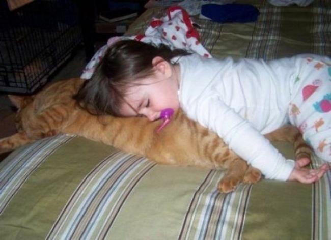 Уэтого кота можно поучиться терпению исмирению.