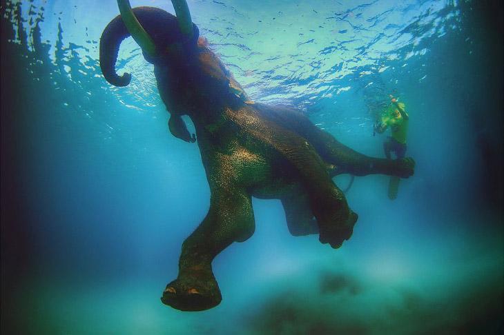 1. Первая камера появилась у Ali Bin Thalith в 18 лет, но подводной съемкой он занялся только 1