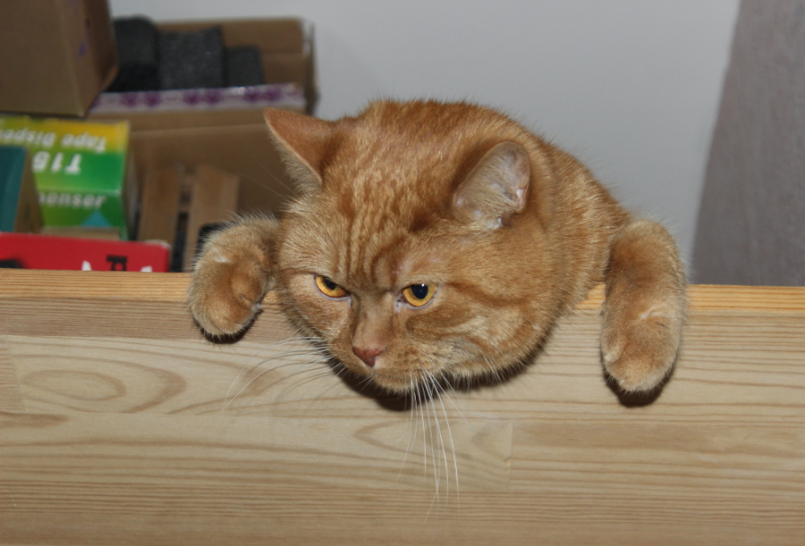 Кот Тоша