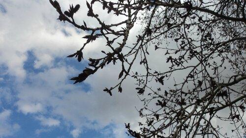 листья распускаются