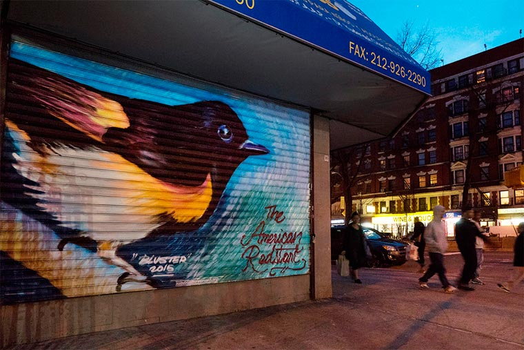 Street art - Painting 314 endangered bird species on the facades of Manhattan