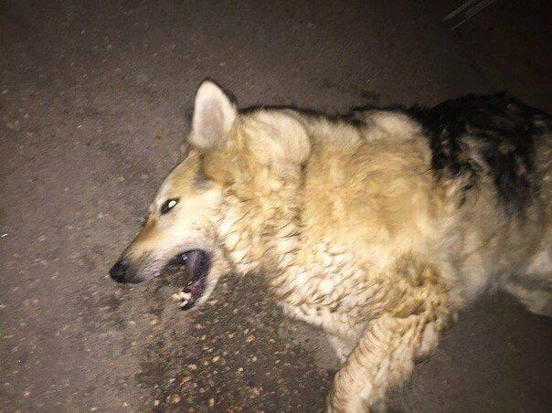 В Крыму травят собак к 9 мая