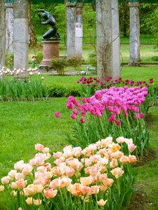 Илионей и тюльпаны.