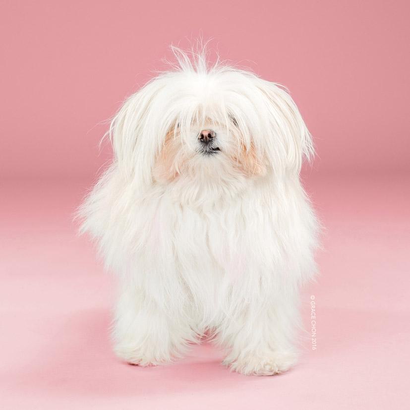 Grace Chon - Hairy - Yuki до визита к парикмахеру